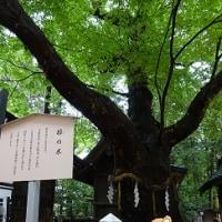穂高の木ワンコの木 その壱
