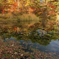 ばや池の紅葉