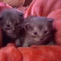 産まれて2週間くらいのエルとジュリア。可愛い!