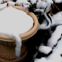 3月末の積雪…… また、春が遠のく