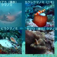 石垣島PartⅡ