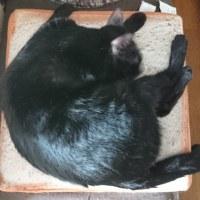 【小梅・さくら・桃之介通信】箱猫とお昼寝と焦げチョコパン再び、そして\(^o^)/バンザイ♪