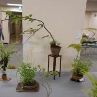 山野草ぼん草展「和み 癒し 不思議の空間・・・・・」