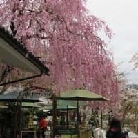 春彩の南東北紀行 その3 ( 五色沼・鶴ヶ城・会津武家屋敷 )