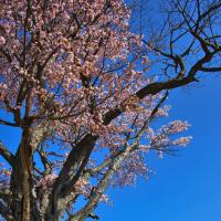 春風景(ニセコ)