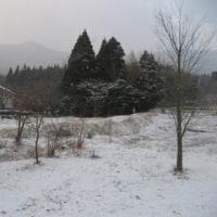 積雪に風邪