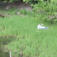 舟田池と野鳥