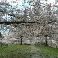 桜の丘のプレゼント。主人から。