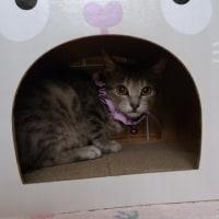 昭和園最後の子猫(9匹目)譲渡へ