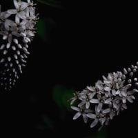 花のデザイン