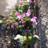 ブロック塀の花
