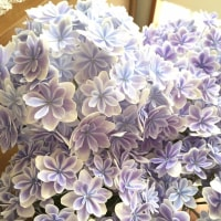 紫陽花 色々
