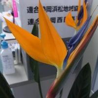 「12月」のお花