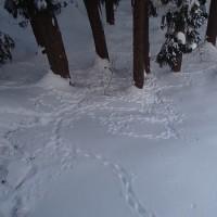 山小屋で雪掘り、畑で芋掘り・・・
