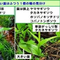 湯ノ丸山系のラン2