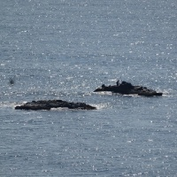 水温15°、真鯛は浅瀬に、竿をとばされた