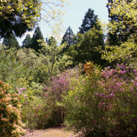 岐阜県多治見市の潮見の森でセンダイムシクイに出会いました。