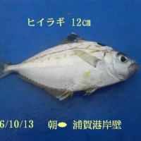 笑転爺の釣行記 10月13日☁ 浦賀港岸壁