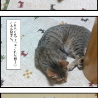 部屋のカーペットを変えまして、