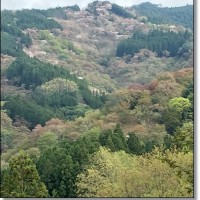 吉野の奥千本へ桜を求めて行ってきました~2
