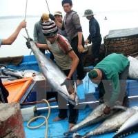 日本のマグロの輸入税を撤廃するために ベトナム