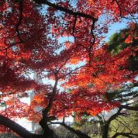 紅葉散歩~新宿御苑・神宮外苑