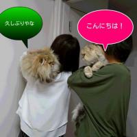 モモタロウの大冒険 ecoさんのお宅編 メインストーリー②