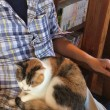 猫カフェ町家