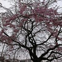 浅草散歩その2 ☆【伝法院庭園特別拝観と大絵馬寺宝展】