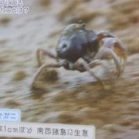奄美の海 マングローブ 2017.04.01「299」