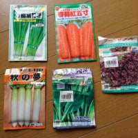 昨日は野菜の種まきで大忙し