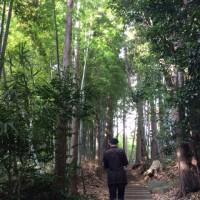 小田急散歩♪ 柿生駅(麻生川)コース