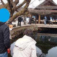 伊豆・河口湖の旅 その4 忍野八海