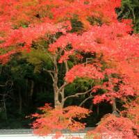 京都東山Ⅲ