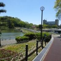 近くの大池公園に行ってきました