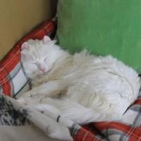 深夜雑談:Frau.Bachと猫ソファ