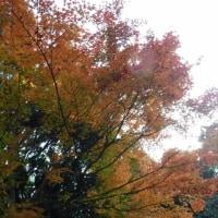 里山の秋を満喫した陽依でした。