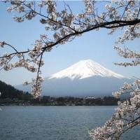 囲碁と河口湖桜富士3