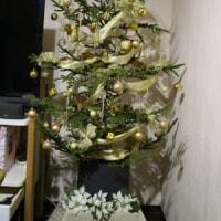 モミの木の飾りつけ