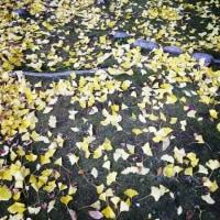 鼓が滝・瑞宝寺公園