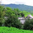 暑さ厳しき折り、奈良の里山のいま
