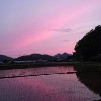 ピンク色の空!?