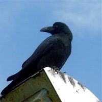 aves 532