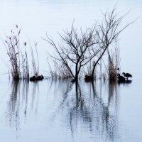 冬枯れの湖面
