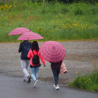 雨降りやまず