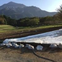 羊山公園  芝桜の丘 土壌改良工事中❗️