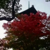 名古屋で紅葉を満喫