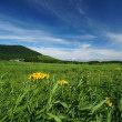 坊がつる・法華院から下山 ~ 長者原(タデ原湿原) 夏の山野草 散策