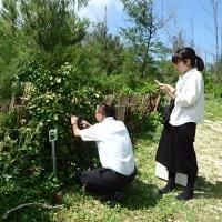 2017年度環境市民活動助成・緑化植花助成を受けます。