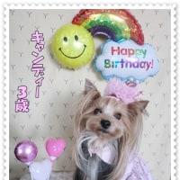 ♪キャンディー3歳のお誕生日♪
